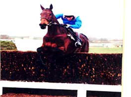 Ask Tom Maghull Novice chase 1996