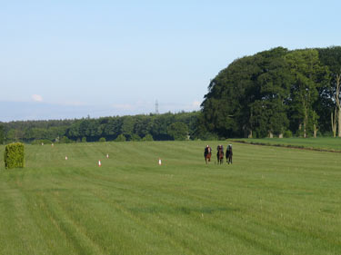 Training on the grass gallops